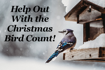 Help out with the Christmas Bird Count!