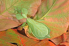 Insect hidden on leaf
